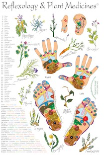 Reflexology and Plant Medicine Chart
